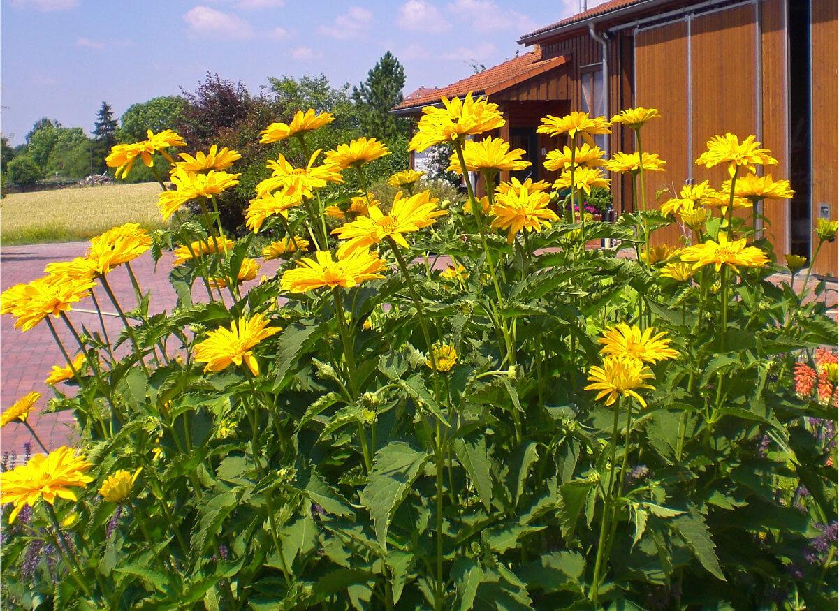 Blumenbusch auf dem Unternehmensgelände