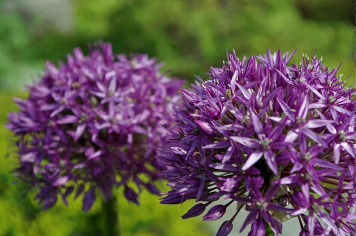Gartengestaltung mit ansprechenden Blumen