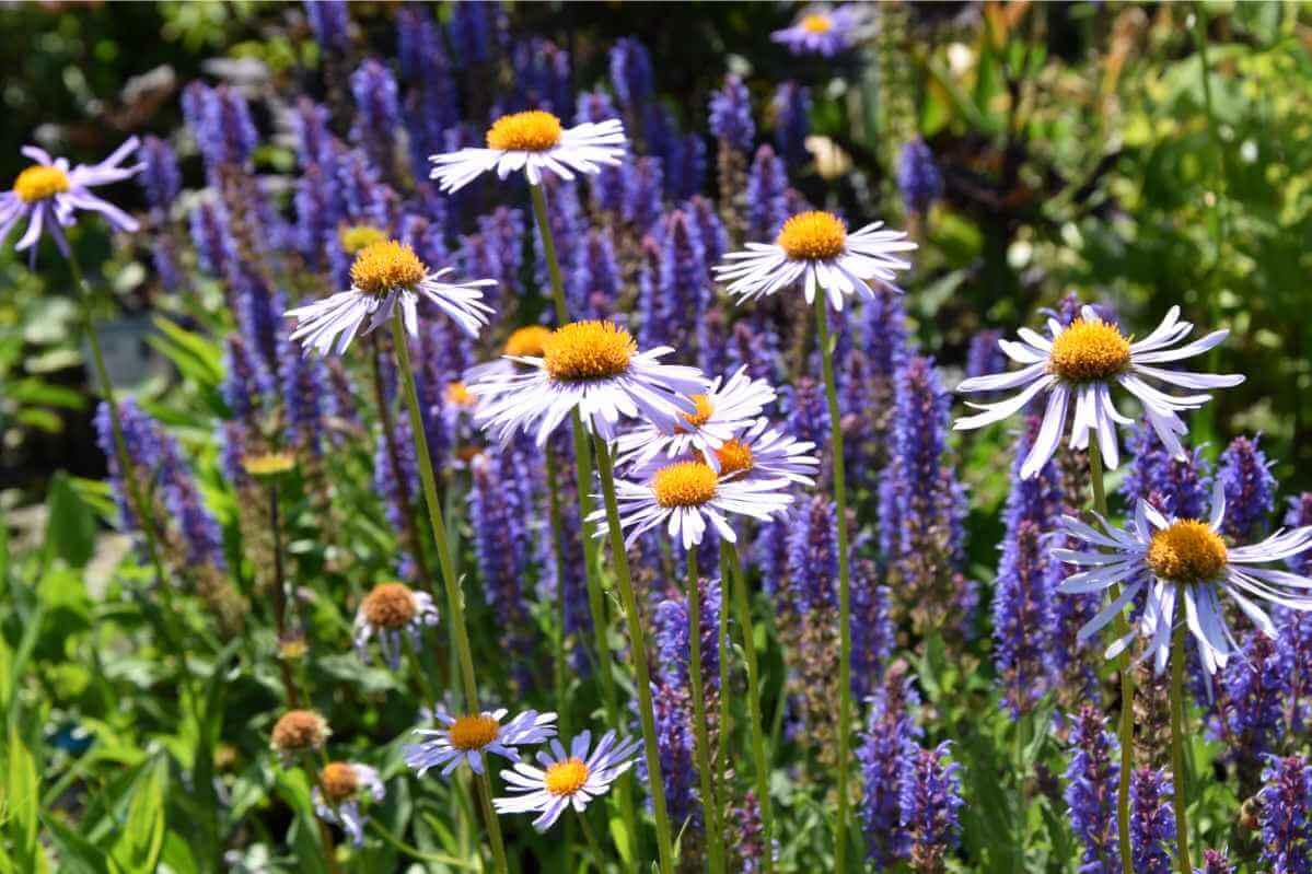 Blumenbeet